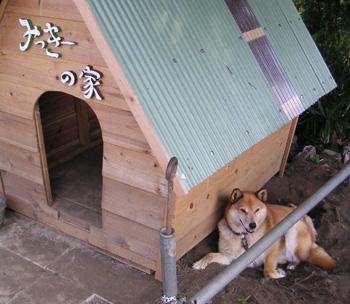 アイドル犬ミッキー
