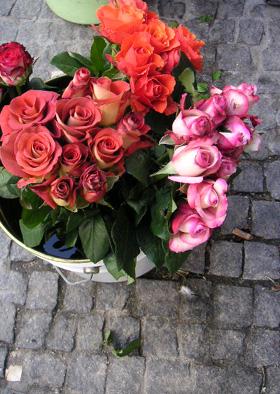 街でみかけたバラ